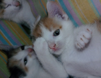 Figle kotków. Tosia i rudzik.
