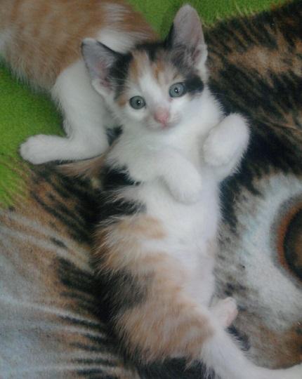 Piękna psotna kotka, która wabi się Tosia.