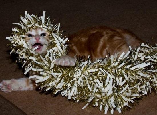 Zdjęcie znalezione na Petforums.co.uk